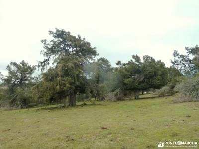 Acebos y Enebral de Prádena; madrid sierra pueblos sierraamantes de la naturaleza